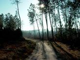 La forêt de Donnezac avec chien