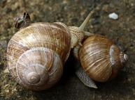 snail-family-1358068-640x480