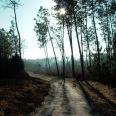 La forêt de Donnezac
